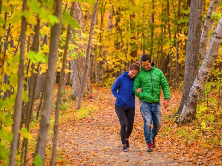 gens qui marchent dans la forêt